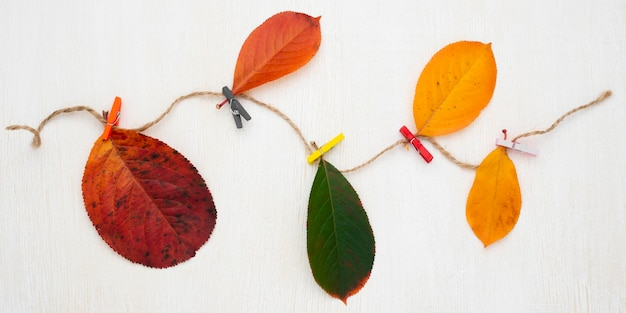 Top view of assortment of autumn leaves with string