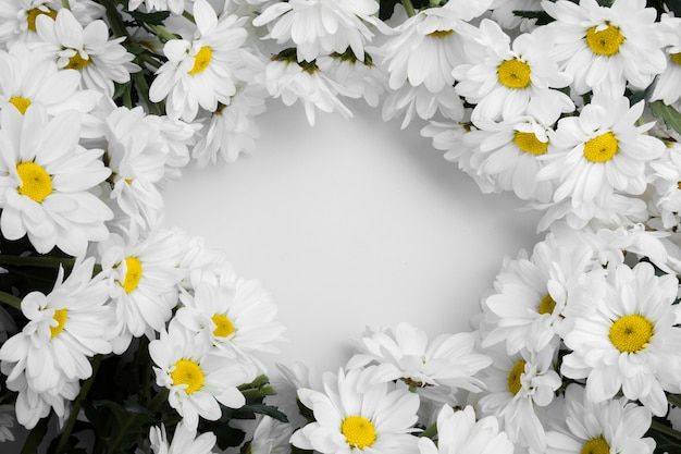Top view assortment of  daisies frame