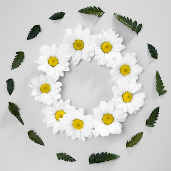 Top view assortment of daisies and green leafs