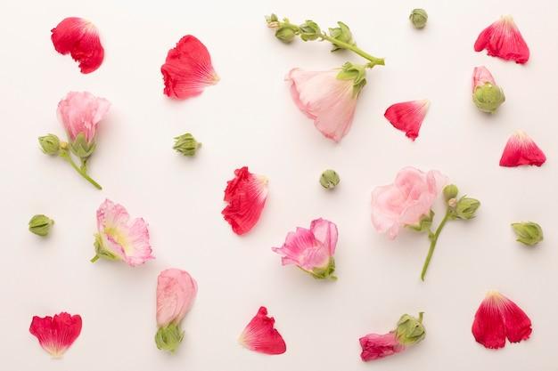 Top view assortment of flowers petals