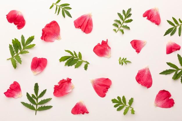 Vista dall'alto assortimento di petali di fiori