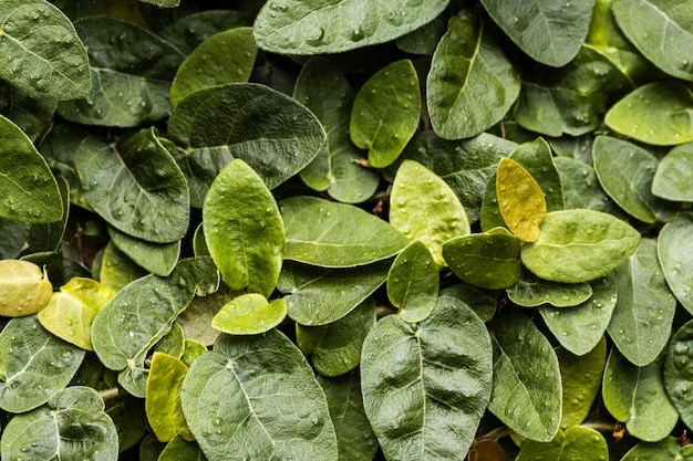 Top view of assortment of leaves