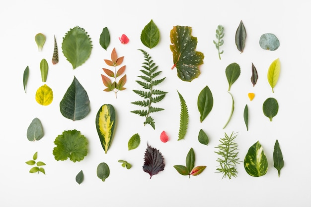 Top view assortment of nature leafs