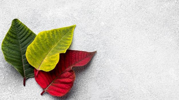 コピースペースとカラフルな葉の上面図の品揃え