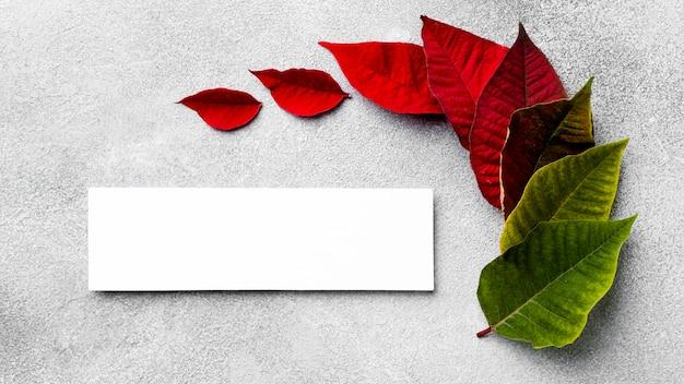 空のカードと色とりどりの葉の上面図の品揃え
