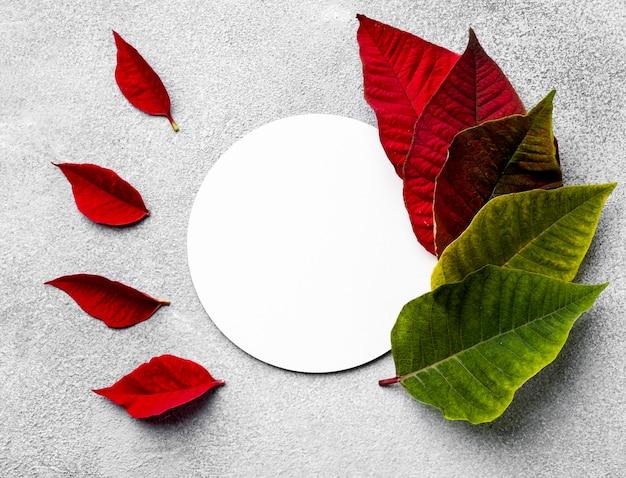 丸いカードと色とりどりの葉の上面図の品揃え