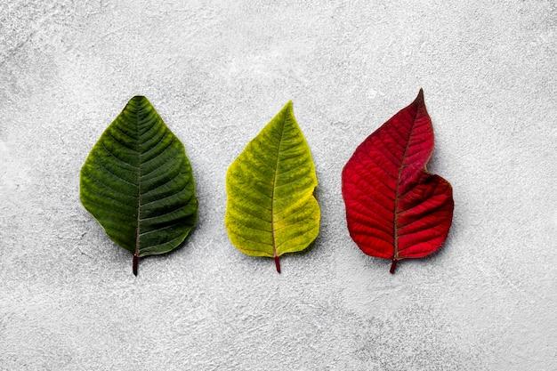 色とりどりの葉の上面図の品揃え