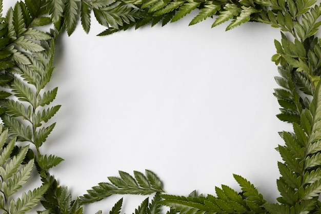 Вид сверху ассортимент зеленых листьев с копией пространства