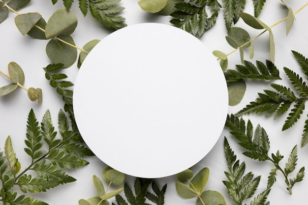 Вид сверху ассортимент зеленых листьев с рамкой