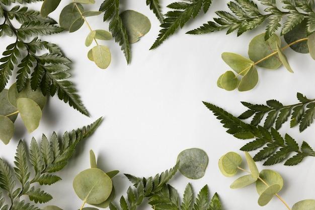녹색의 상위 뷰 구색 leafs