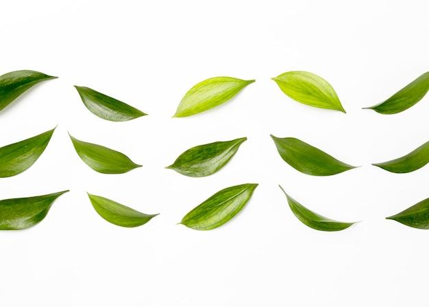 Вид сверху ассортимент зеленых листьев