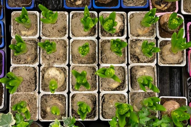 土壌中の植物のトップビューの品揃え