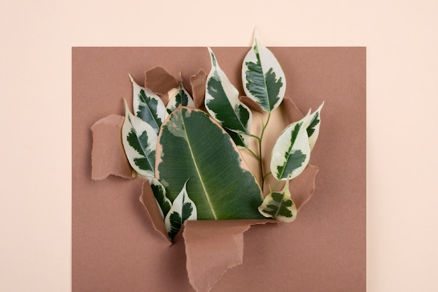 Top view of assortment of plant leaves with torn paper