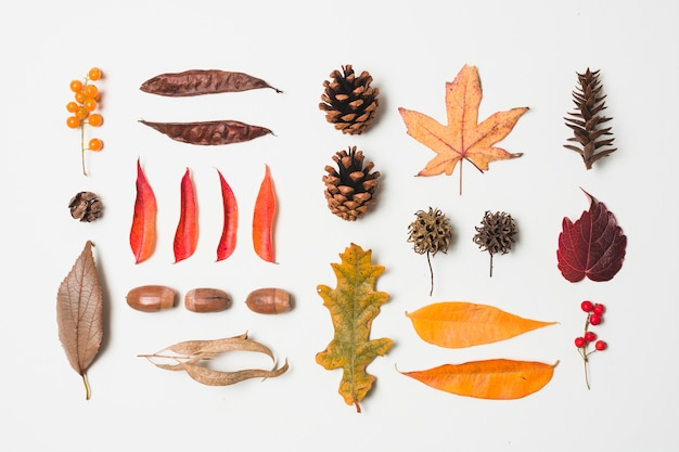 Top view autumn leaves assortment