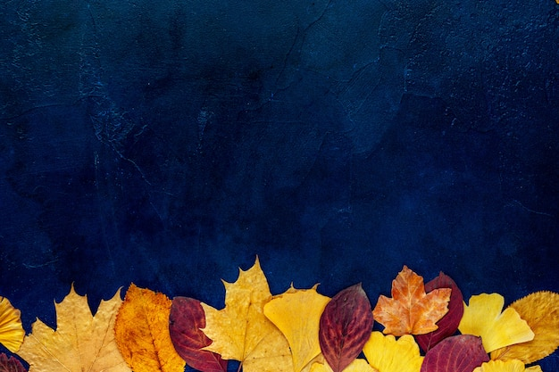 Top view of autumn leaves on blue background