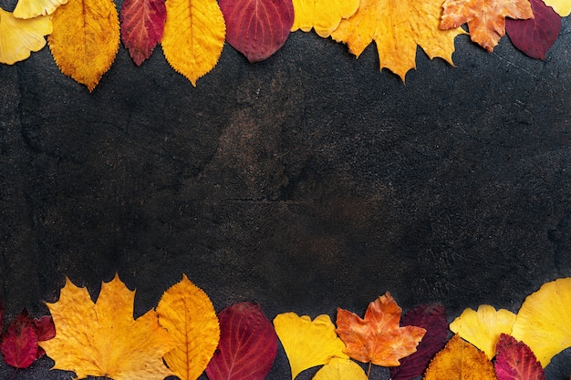 Top view of autumn leaves on dark background