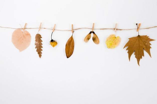 Top view autumn leaves line