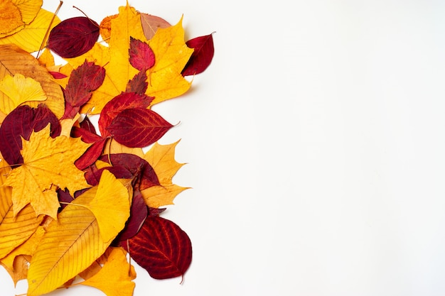Top view of autumn leaves on white background