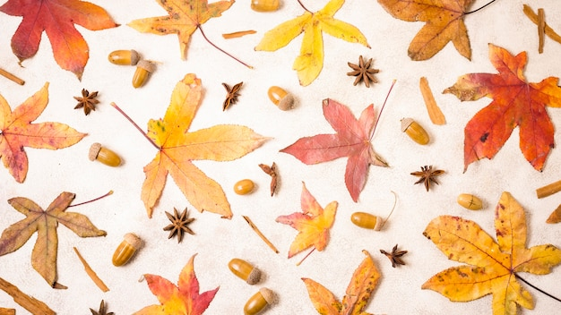 Top view of autumn leaves with acorns