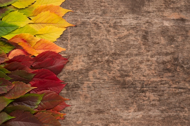 Top view of autumn leaves with copy space
