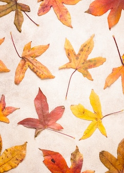 Top view of autumn leaves