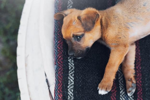 外に横たわっている赤ちゃんの赤い犬の上面図。