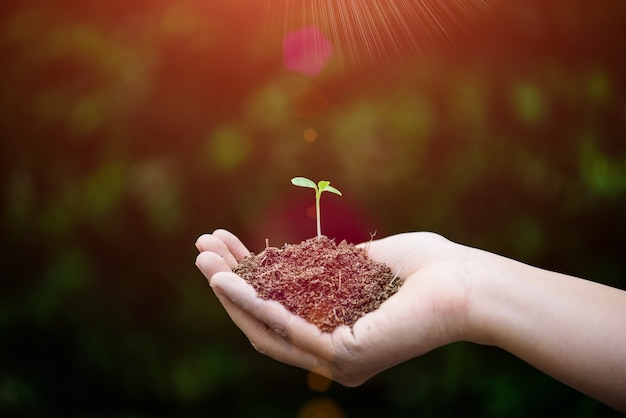 Top view of baby tree with soil in background. earth day concept