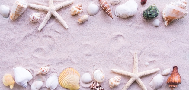 Top view, beach and shell