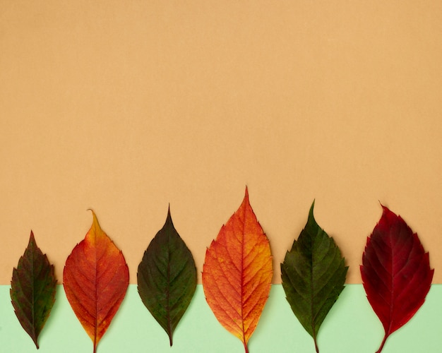 Top view of beautiful autumn leaves with copy space