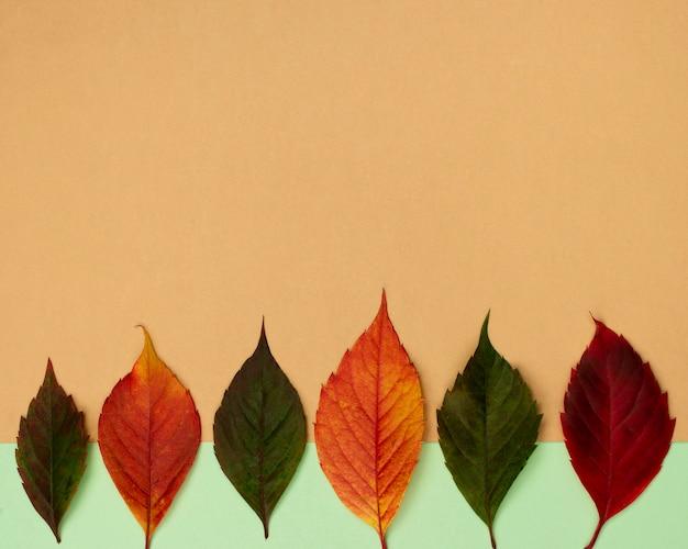 Vista dall'alto di belle foglie di autunno con lo spazio della copia
