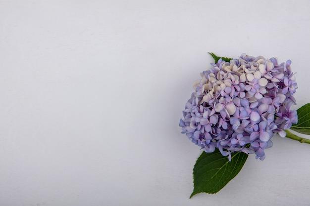 Vista dall'alto del bellissimo fiore di gardenzia con foglie su uno sfondo bianco con spazio di copia