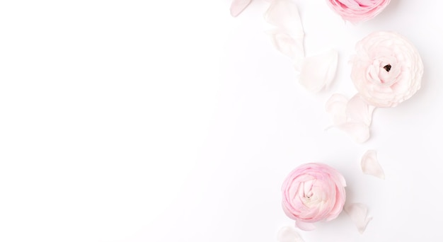 Top view of beautiful pink flowers with green leaves on white background