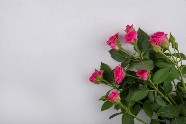 Top view of beautiful pink roses with leaves on a white background with copy space