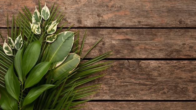 Top view of beautiful plant leaves on wooden surface