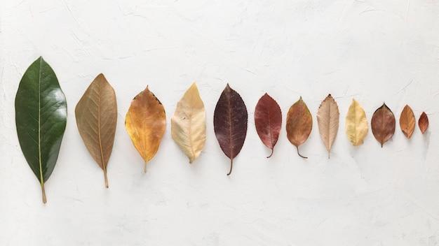 Vista dall'alto di foglie autunnali splendidamente colorate disposte in linea