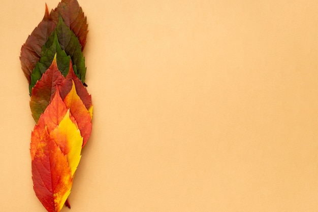 Top view of beautifully colored autumn leaves with copy space