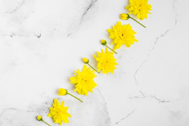 Top view of beautifulo spring daisies with marble background