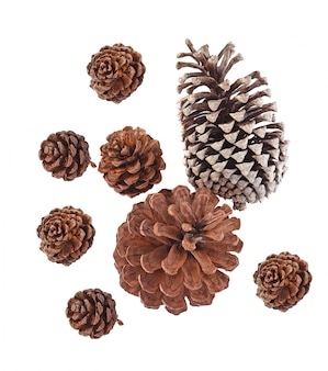 Top view of big set cones various coniferous trees isolated on white background