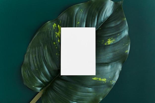 Вид сверху пустой визитной карточки на фоне листьев
