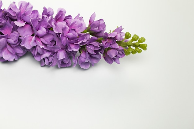 Top view blooming flowers bouquet