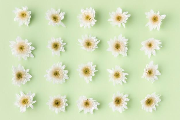 Вид сверху цветущие цветы Бесплатные Фотографии