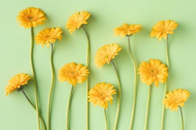 Вид сверху цветущие цветы