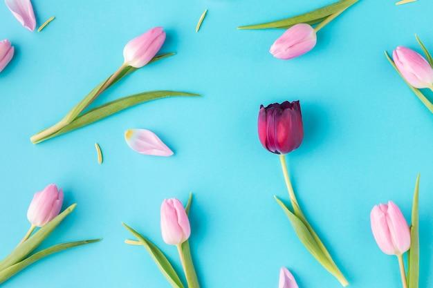 Вид сверху цветущих тюльпанов