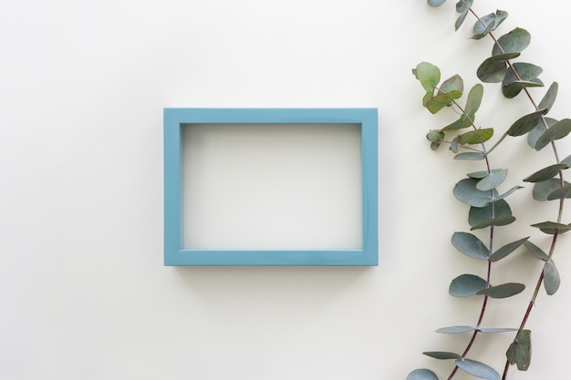 Top view of blue border picture frame and eucalyptus populus branch
