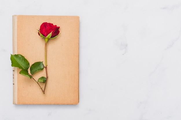 Top view of book and rose