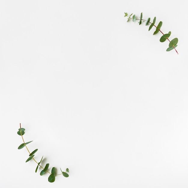 Top view botanical concept with copy space