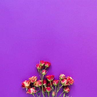 Top view bouquet of carnation flowers on violet copy space background