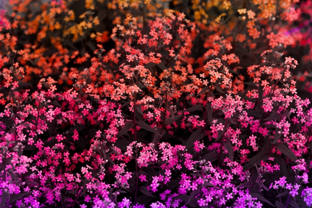 Top view bright toned natural backdrop forget me not flowers