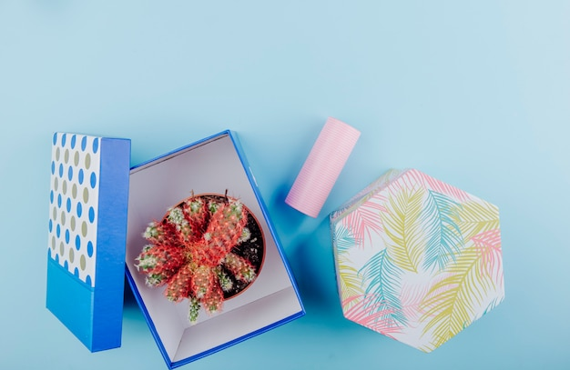 Top view of a cactus in a flowerpot in a carton gift box and roll of adhesive tape on blue background with copy space