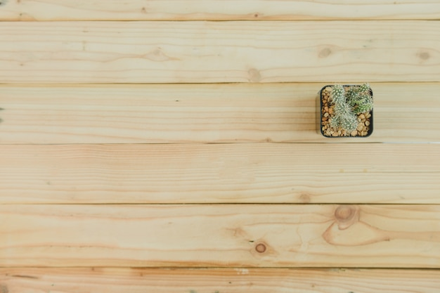 Top view of cactus on wooden background